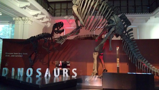 オーストラリア博物館内部の恐竜の展示