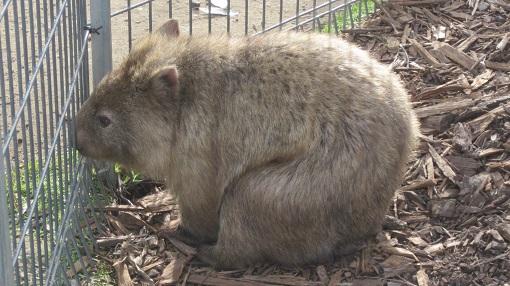 シンビオ動物園シドニー