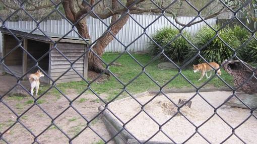 Symbio Wildlife Park(シンビオ・ワイルドライフ・パーク)
