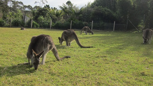 シドニー動物園