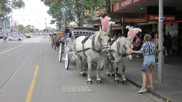 Melbourne CBD Horse Carriage