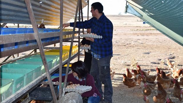 オーストラリア卵ケージフリー