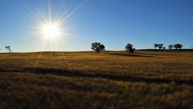 オーストラリア農業視察 ファーム