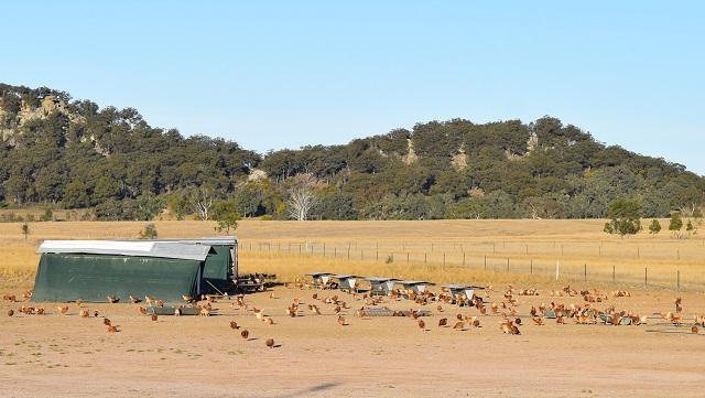 オーストラリア卵農家