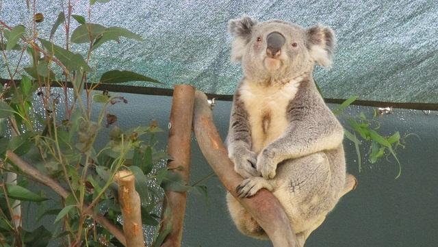 ワイルドライフ・シドニー動物園(Wild Life Sydney Zoo)