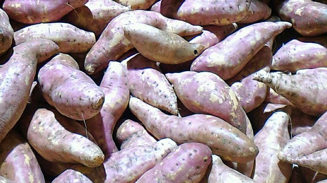 バンダバーグのさつま芋ファーム